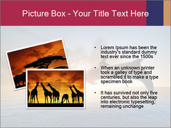 Couple jumping dolphins PowerPoint Template - Slide 20