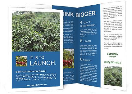 0000094564 Brochure Template