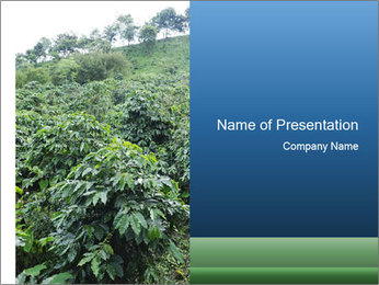 Coffee plant PowerPoint Template - Slide 1
