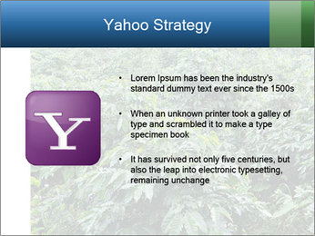 Coffee plant PowerPoint Template - Slide 11