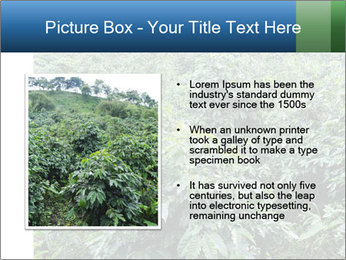 Coffee plant PowerPoint Template - Slide 13