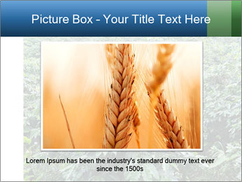 Coffee plant PowerPoint Template - Slide 15