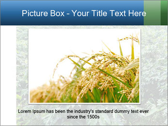 Coffee plant PowerPoint Template - Slide 16
