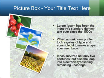 Coffee plant PowerPoint Template - Slide 17