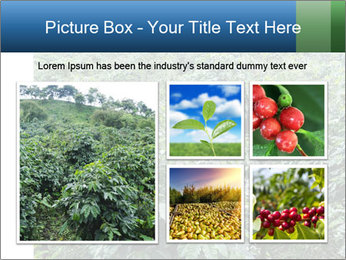 Coffee plant PowerPoint Template - Slide 19