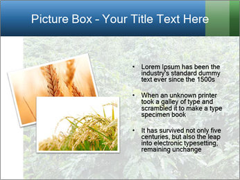 Coffee plant PowerPoint Template - Slide 20
