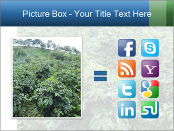 Coffee plant PowerPoint Template - Slide 21