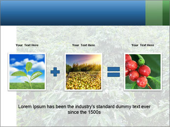 Coffee plant PowerPoint Template - Slide 22
