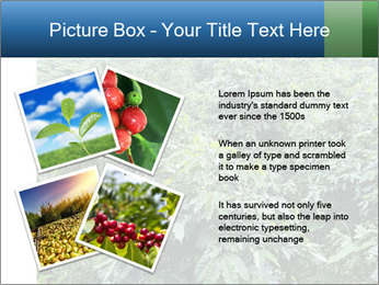 Coffee plant PowerPoint Templates - Slide 23