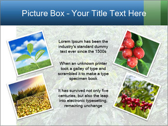 Coffee plant PowerPoint Templates - Slide 24