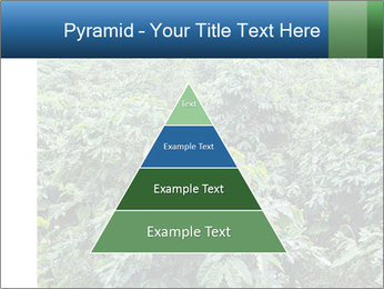 Coffee plant PowerPoint Template - Slide 30