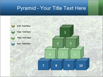 Coffee plant PowerPoint Template - Slide 31