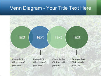 Coffee plant PowerPoint Template - Slide 32