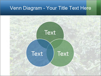 Coffee plant PowerPoint Template - Slide 33