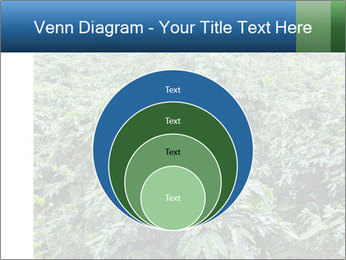 Coffee plant PowerPoint Template - Slide 34