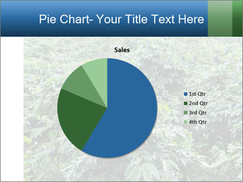 Coffee plant PowerPoint Template - Slide 36