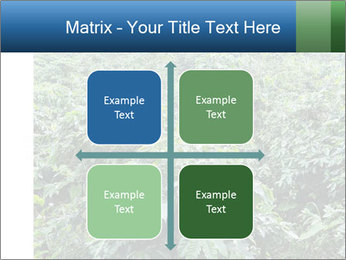 Coffee plant PowerPoint Template - Slide 37
