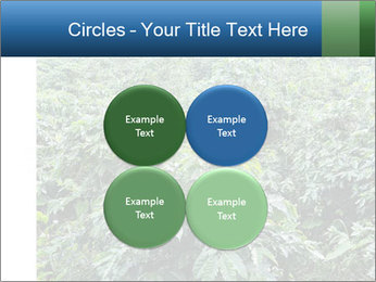 Coffee plant PowerPoint Template - Slide 38