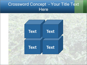 Coffee plant PowerPoint Template - Slide 39