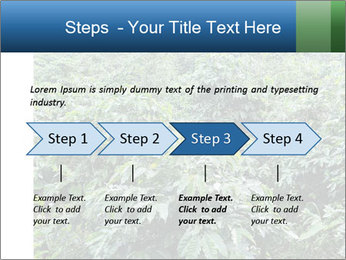 Coffee plant PowerPoint Template - Slide 4