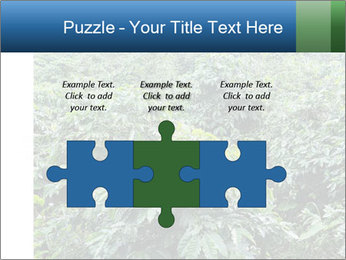 Coffee plant PowerPoint Template - Slide 42