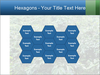 Coffee plant PowerPoint Templates - Slide 44