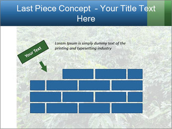 Coffee plant PowerPoint Template - Slide 46