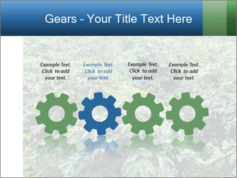 Coffee plant PowerPoint Template - Slide 48