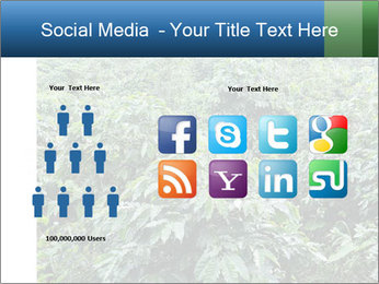 Coffee plant PowerPoint Template - Slide 5