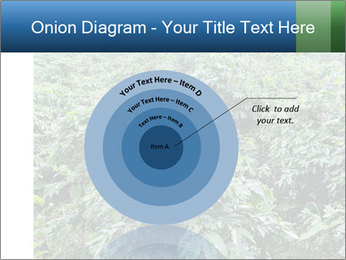 Coffee plant PowerPoint Template - Slide 61