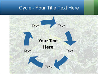 Coffee plant PowerPoint Template - Slide 62