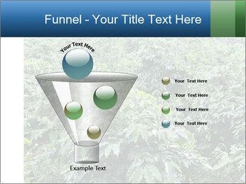 Coffee plant PowerPoint Template - Slide 63