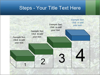Coffee plant PowerPoint Template - Slide 64
