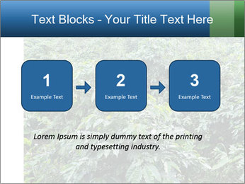 Coffee plant PowerPoint Template - Slide 71