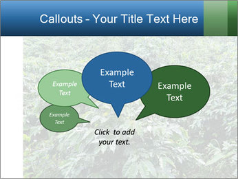 Coffee plant PowerPoint Template - Slide 73