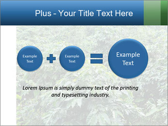 Coffee plant PowerPoint Template - Slide 75