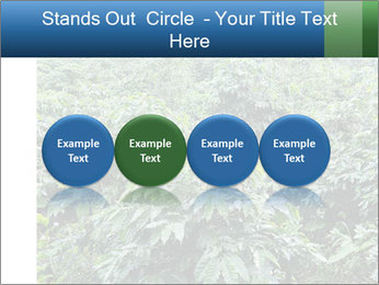 Coffee plant PowerPoint Template - Slide 76