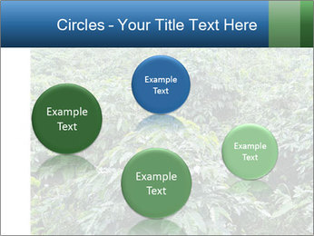 Coffee plant PowerPoint Template - Slide 77