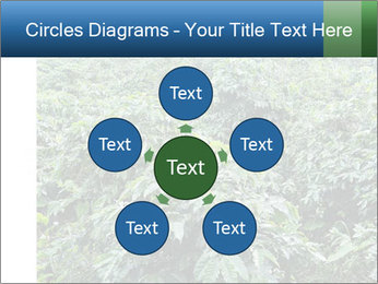 Coffee plant PowerPoint Template - Slide 78