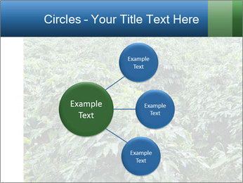 Coffee plant PowerPoint Template - Slide 79