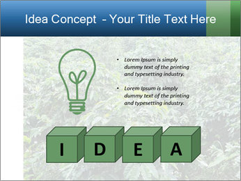 Coffee plant PowerPoint Template - Slide 80
