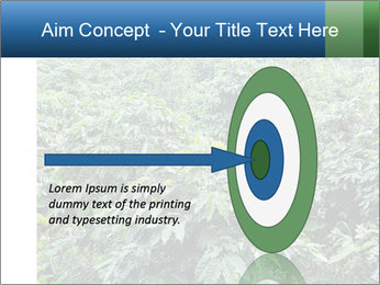 Coffee plant PowerPoint Template - Slide 83