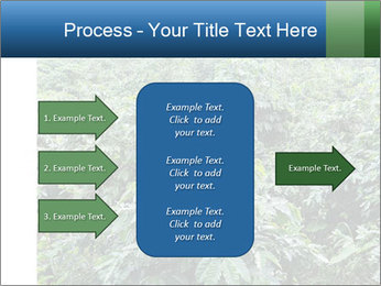 Coffee plant PowerPoint Template - Slide 85
