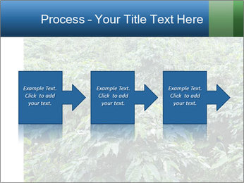 Coffee plant PowerPoint Template - Slide 88