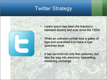 Coffee plant PowerPoint Template - Slide 9
