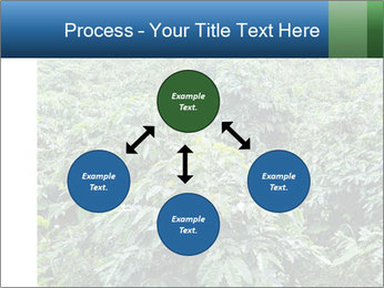 Coffee plant PowerPoint Template - Slide 91
