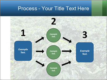 Coffee plant PowerPoint Template - Slide 92