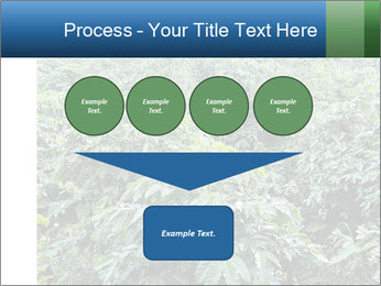 Coffee plant PowerPoint Template - Slide 93