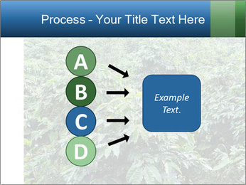 Coffee plant PowerPoint Template - Slide 94