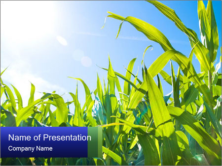 Green corn PowerPoint Template